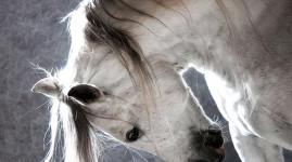 Equita, le cheval fait salon