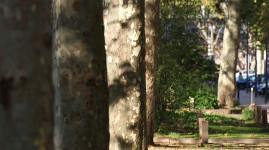 Entretien des arbres du quai Saint-Antoine à Lyon
