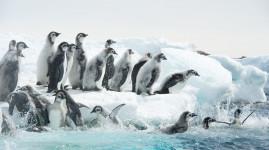 [Prolongation] Antarctica, l'exposition givrée du musée des Confluences