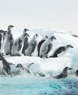 Antarctica, voyage en terre de glace au musée des Confluences