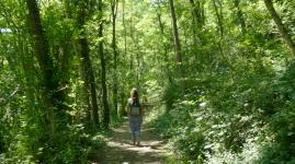 Sentier de l'Yzeron : une balade en forêt dans la Métropole de Lyon