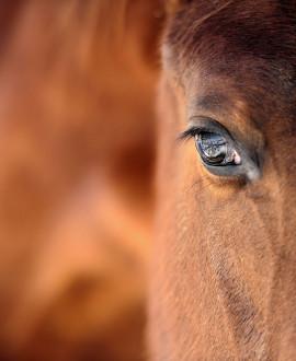 Equita Lyon 2016 : 5 jours pour célébrer le cheval