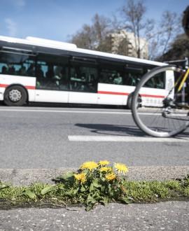 TCL : plus de bus les dimanches de janvier