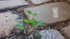 Zéro phyto : et la végétation revient