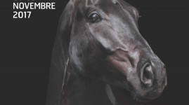 Equita Lyon 2017, nouvelle édition du salon du cheval