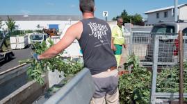 Déchets verts : la collecte redémarre le 8 septembre