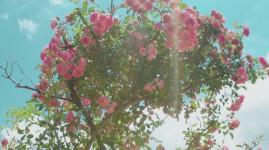 Journées du patrimoine : la roseraie et le potager de Lacroix Laval