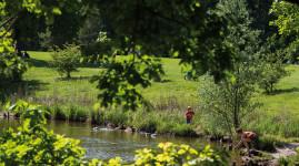 Déconfinement : au tour des parcs et jardins !