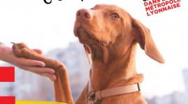 Un kit pour éduquer les chiens citadins