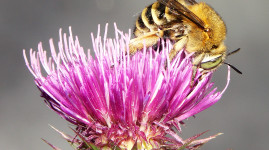 Protégeons les insectes pollinisateurs