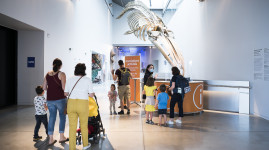 Musée des Confluences, théâtres Lugdunum : le public est de retour !