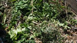 Collecte des déchets verts jusqu'au 5 juin