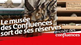 Le musée des Confluences sort de ses réserves