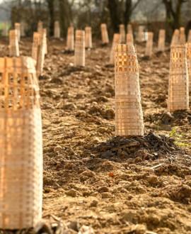 Plantation d'une première forêt urbaine à Saint-Priest