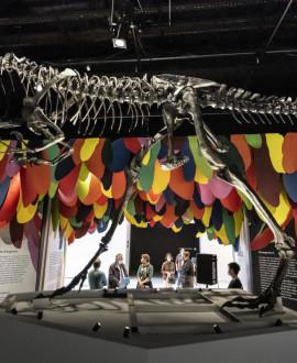 Musée des Confluences : des visites en immersion totale