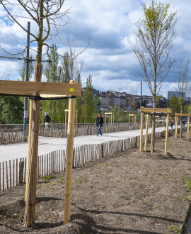 Bienvenue aux nouveaux habitants du quai Sarrail : des arbres !