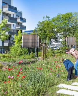Les projets urbains avancent à Rillieux-la-Pape