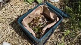 Enquête : comment compostez-vous vos déchets ?
