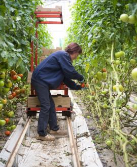 Du bio et du local dans nos assiettes : 3 mesures-phares pour l'agriculture