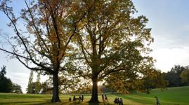 3 800 arbres plantés chaque année dans la forêt des naissances