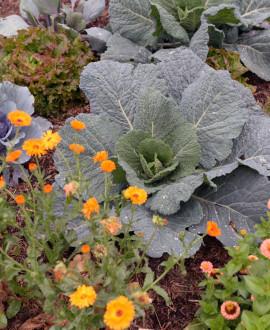Saint-Priest : le jardin potager fait revivre des légumes disparus