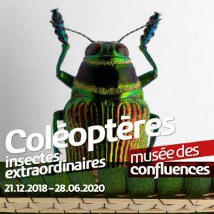 Coléoptères, exposition du musée des Confluences