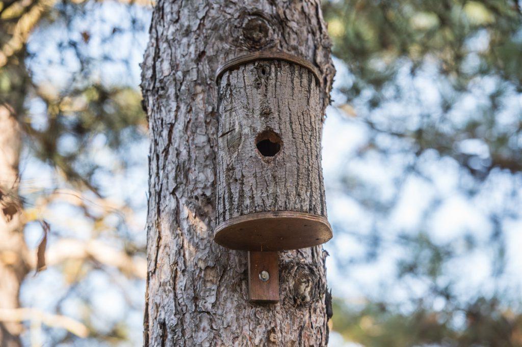 un nichoire à mésanges est installé sur un arbre